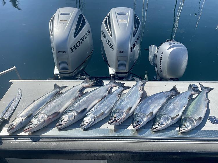 Puget Sound Humpy Salmon Report